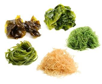sushi sjögräs köpa