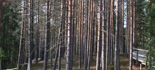 Skogens som skafferi
