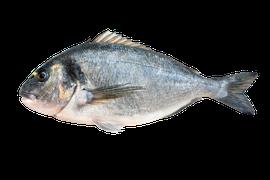 Saltvattensfisk - Guldsparid/Dorada