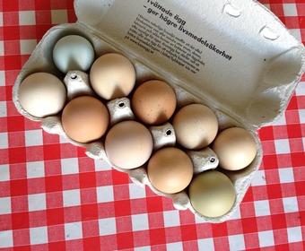 förvaring av kokta ägg