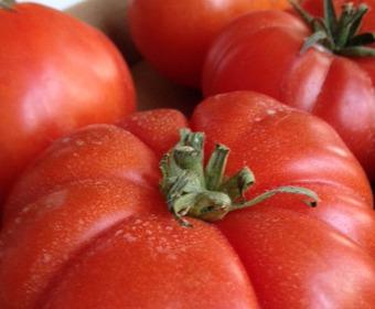 Ekologiska tomater