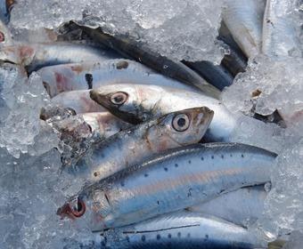 så förvarar man fisk