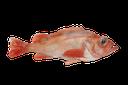 Kungsfisk/Uer