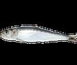 ansjovis, skarpsill, sardin PS