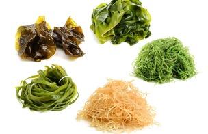 Alger och sjögräs PS