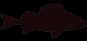 Sötvattensfisk