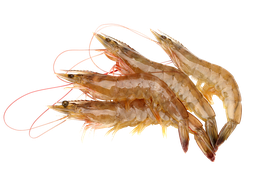 Skaldjur - Nordhavsräkor