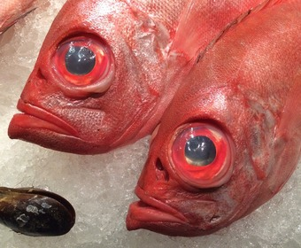Fish PS