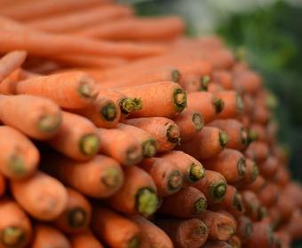 morötter, rotfruktsguide