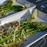 grön sparris med parmesan