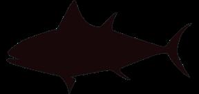 Saltvattensfisk