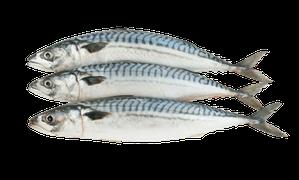 Saltvattensfisk - Makrill