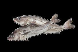 Saltvattensfisk - Kolja