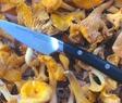 Rensa svamp PS skalkniv