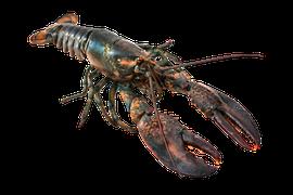 Skaldjur - Hummer
