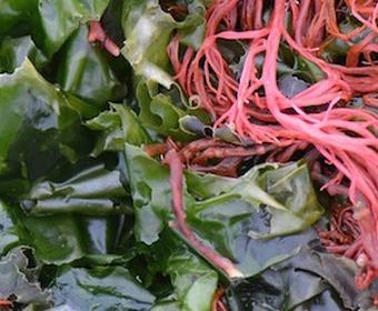 Gröna och röda alger