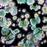 Patogener, bakterier och mögelsvampar